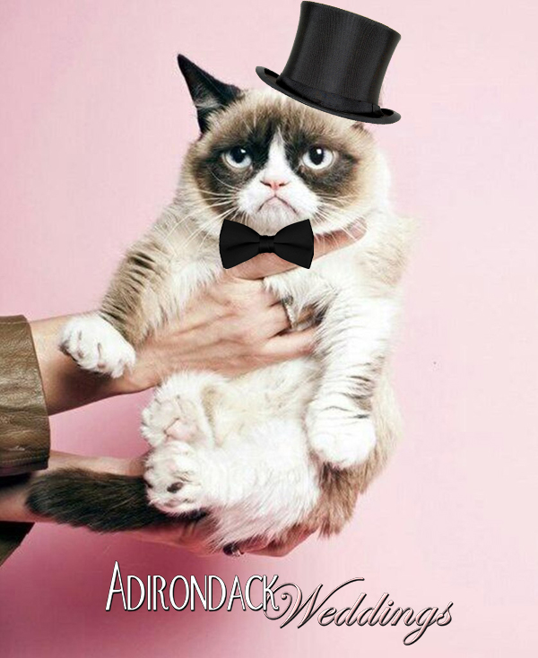 Grumpy Cat | Adirondack Weddings Magazine