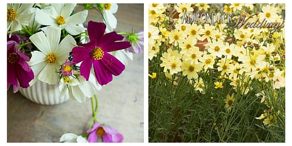 Coreopsis Flowers | Adirondack Weddings Magazine