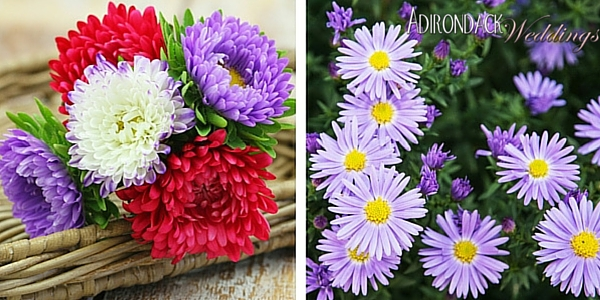 Asters | Adirondack Weddings Magazine