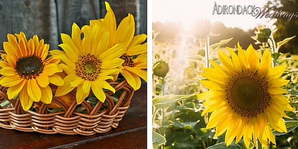 Dwarf Sunflowers |Adirondack Weddings Magazine